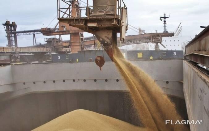 Экспортируем ячмень в Китай