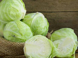 Fresh offer for cabbage Polish origin