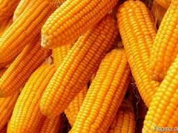 Предложение на пшеницу, кукурузу и ячмень в порту