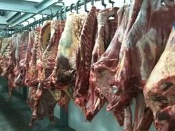 Говядина Halal (только экспорт)