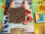Álnus glutinósa , Семена ольхи, ольха семена, ольха черная семена, семена ольхи клейкой - photo 2