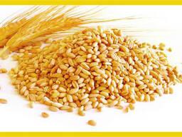 麥子 - photo 1